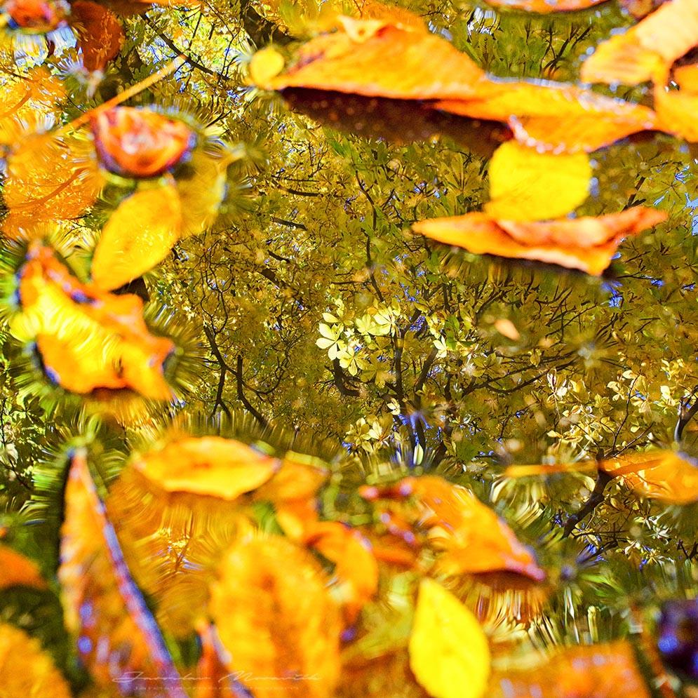 Jesenné odrazy