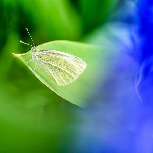 Motýľ - makrofotografia