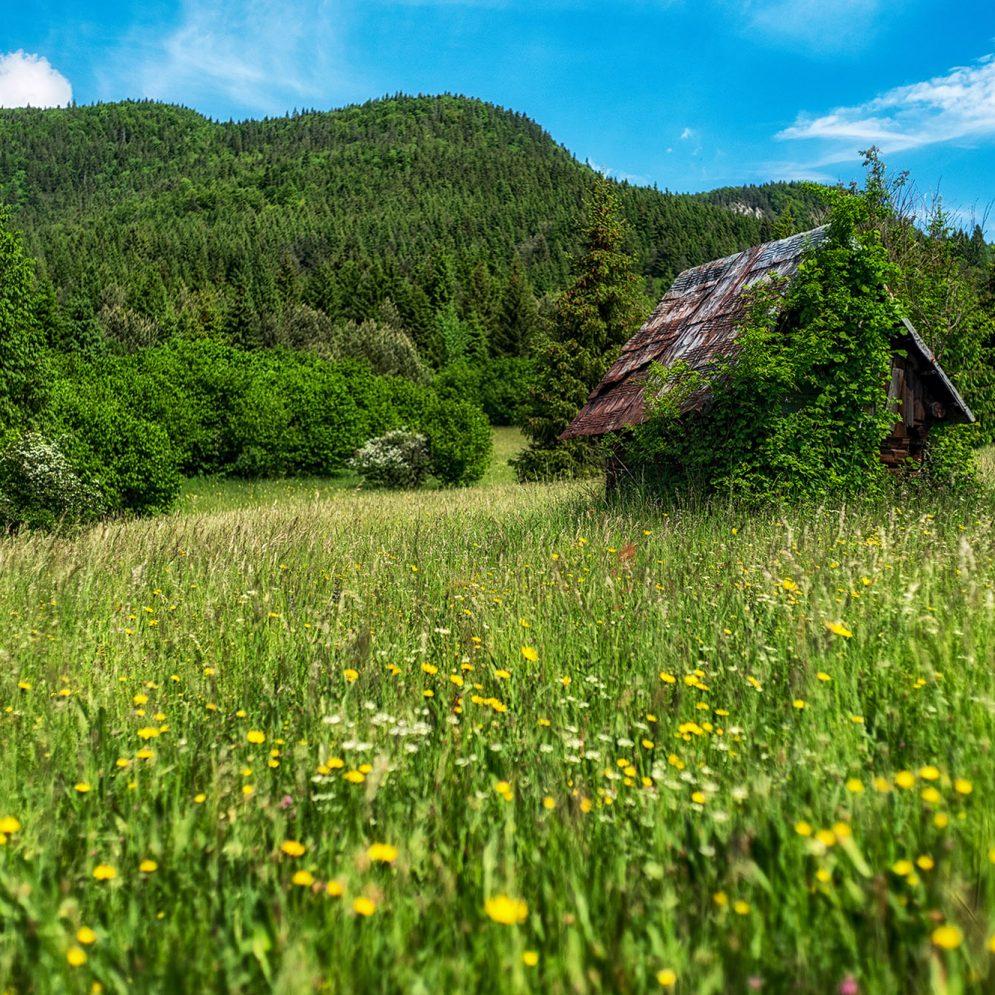 Dubovské meadows